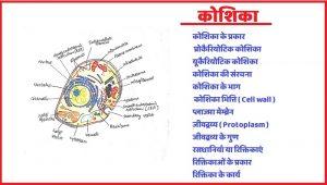 कोशिका किसे कहते हैं , कोशिका के प्रकार , कोशिका की संरचना कोशिका के भाग